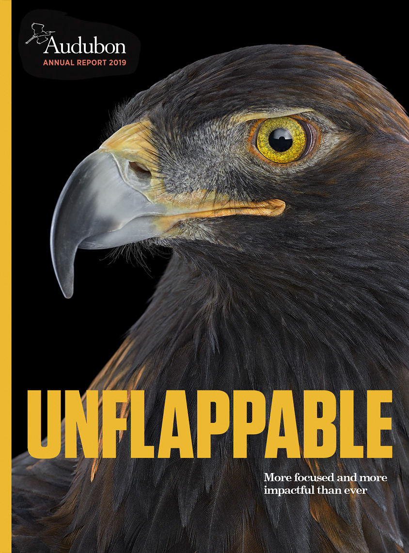 Audubon annual report cover by animal photographer Brad Wilson