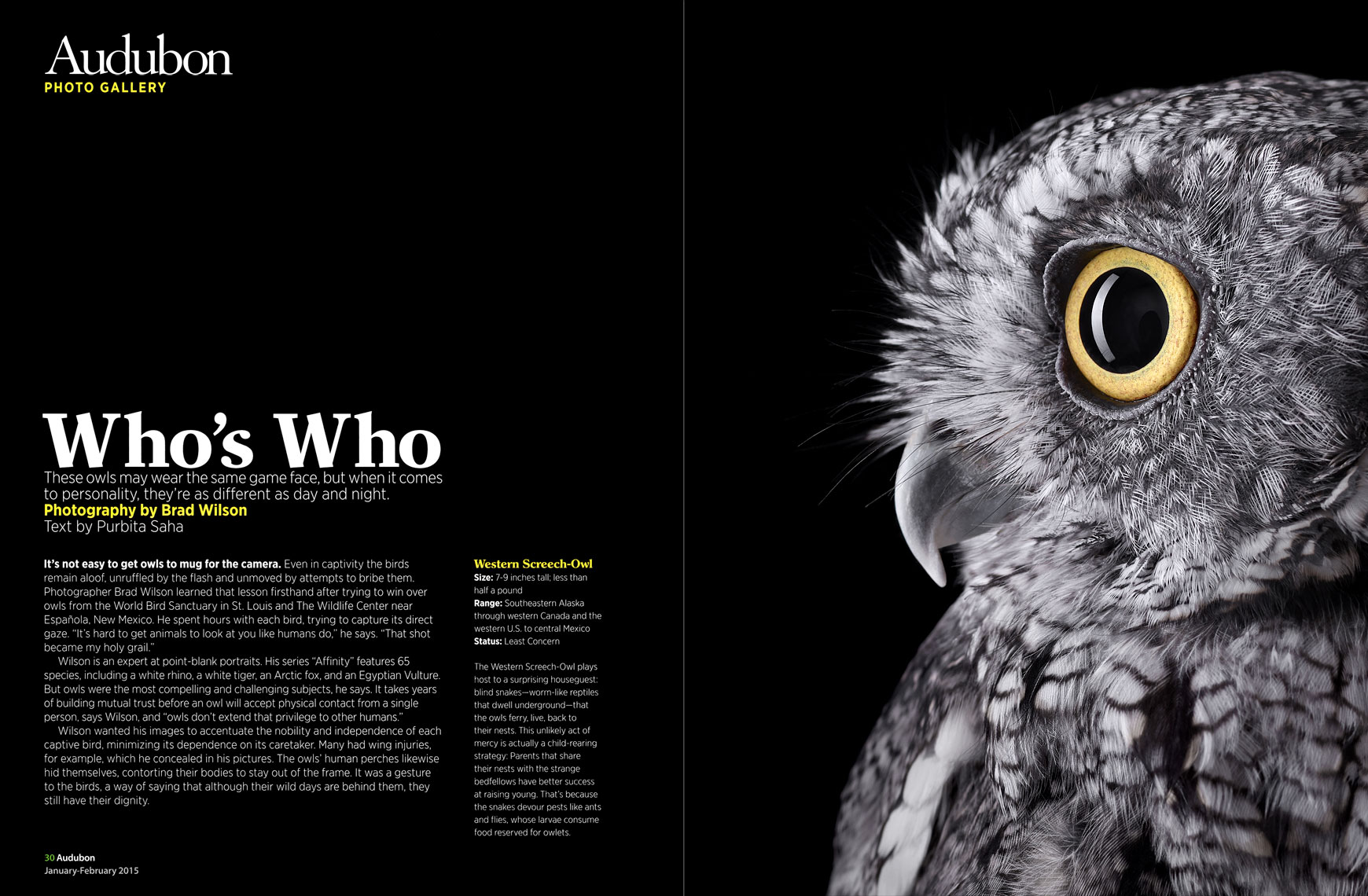 Audubon Magazine article by fine art animal photographer Brad Wilson