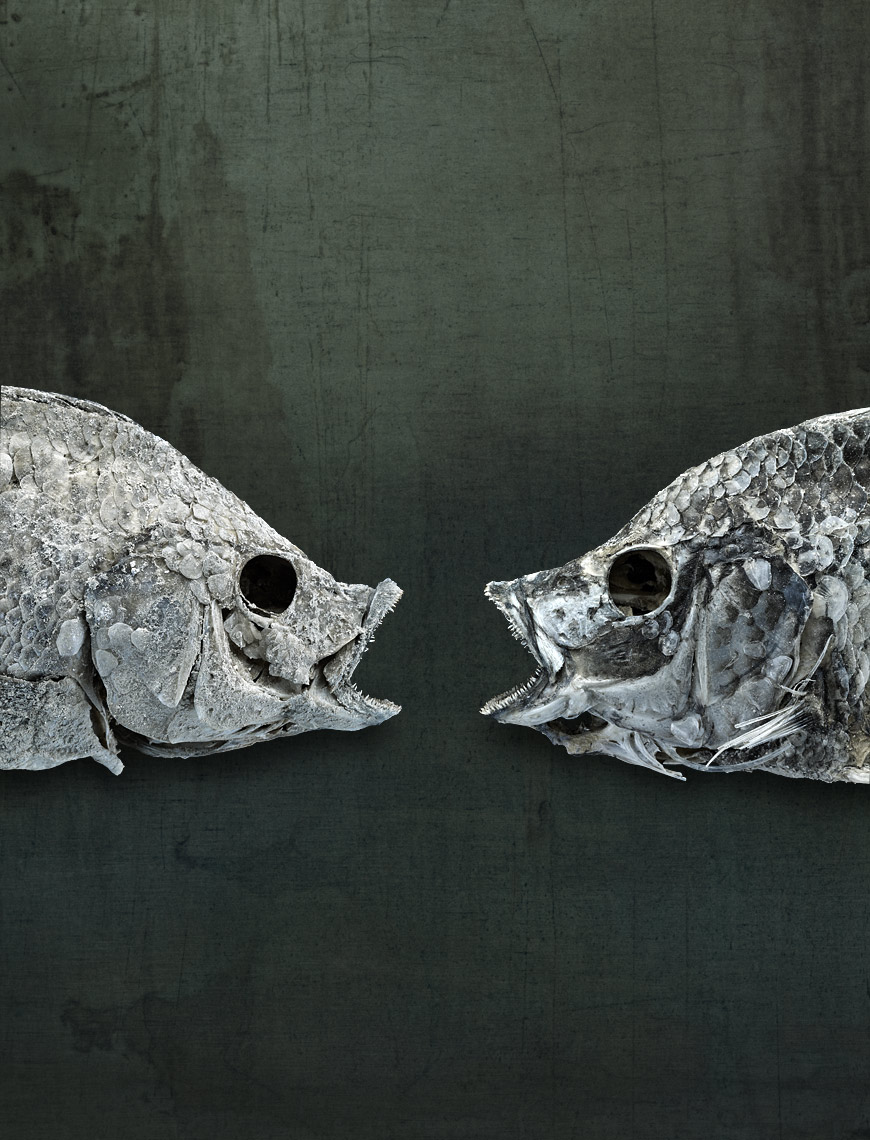 Salton Sea fish still life by fine art wildlife photographer Brad Wilson