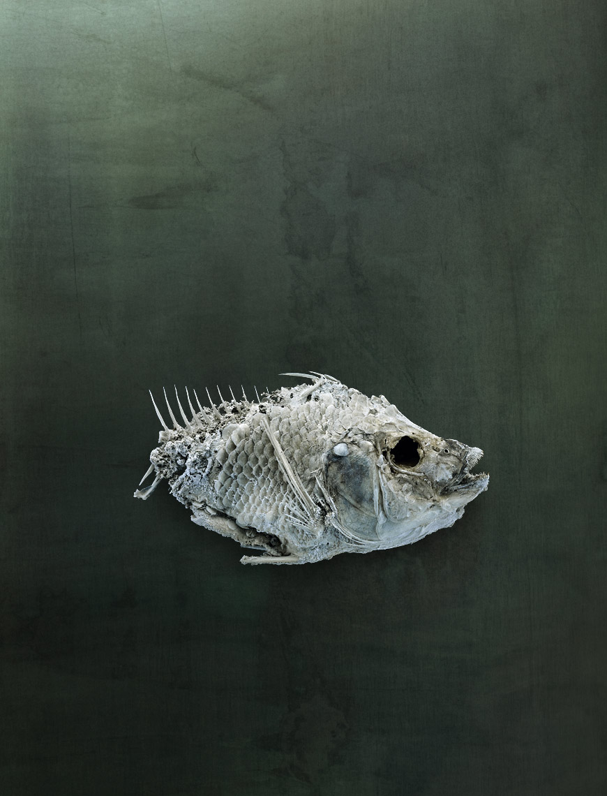 Salton Sea fish still life by fine art animal photographer Brad Wilson