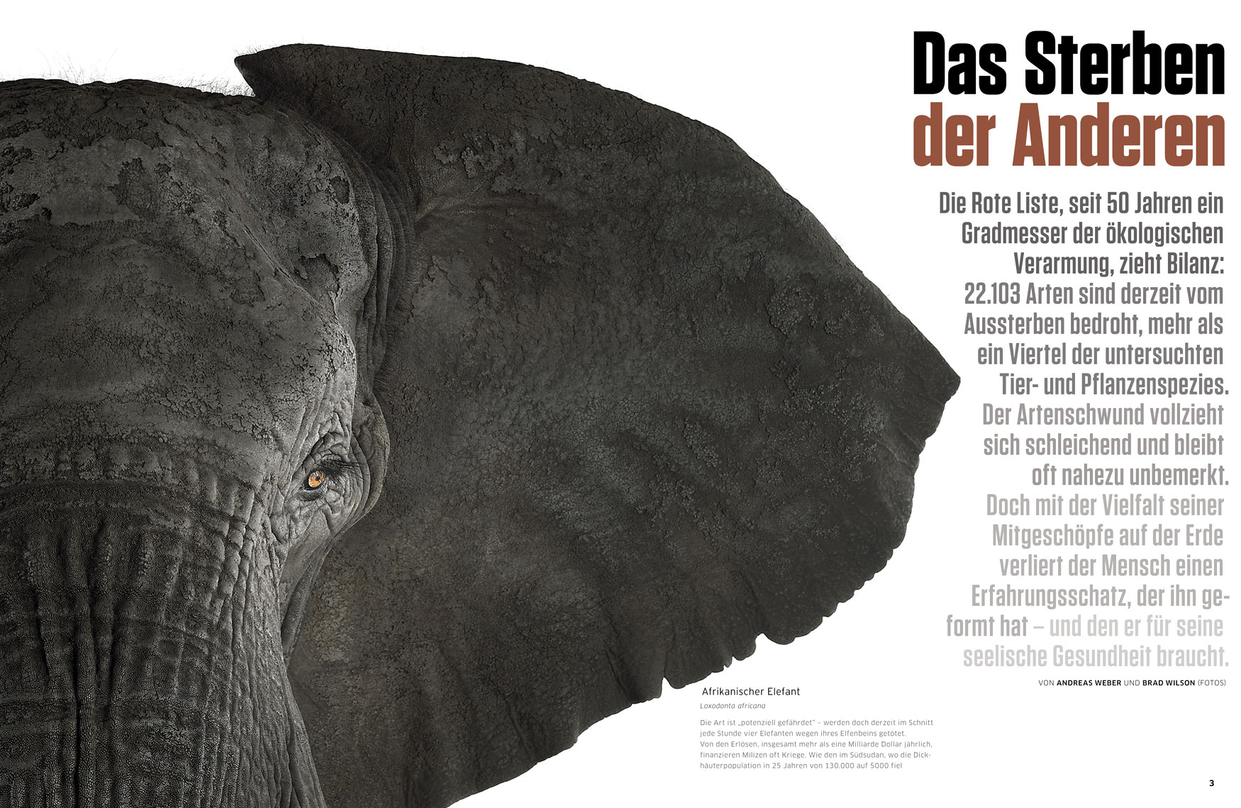 Greenpeace Magazine article about fine art wildlife photographer Brad Wilson
