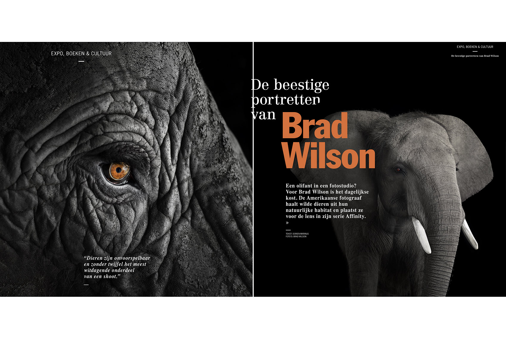 Porsche Magazine article about wildlife photographer Brad Wilson
