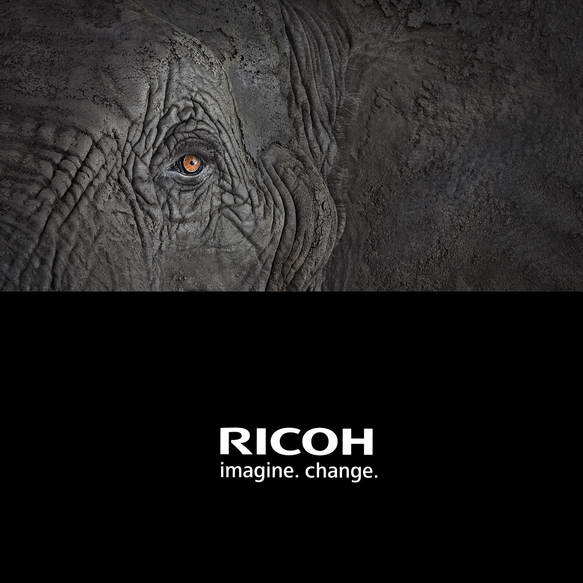 Ricoh advertisement by animal photographer Brad Wilson